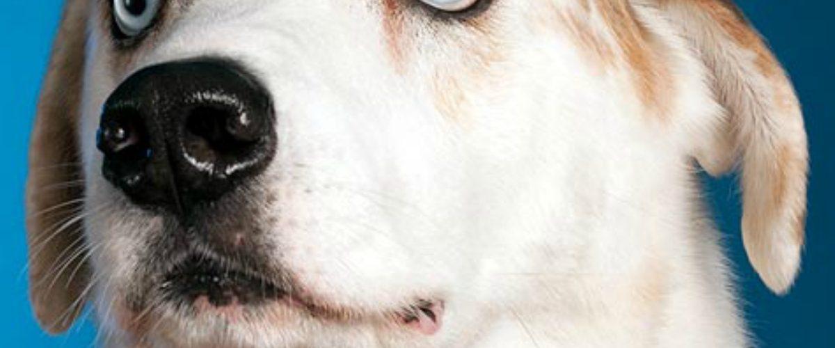 Dueños de perros tienen más fotos de sus mascotas que de sus parejas