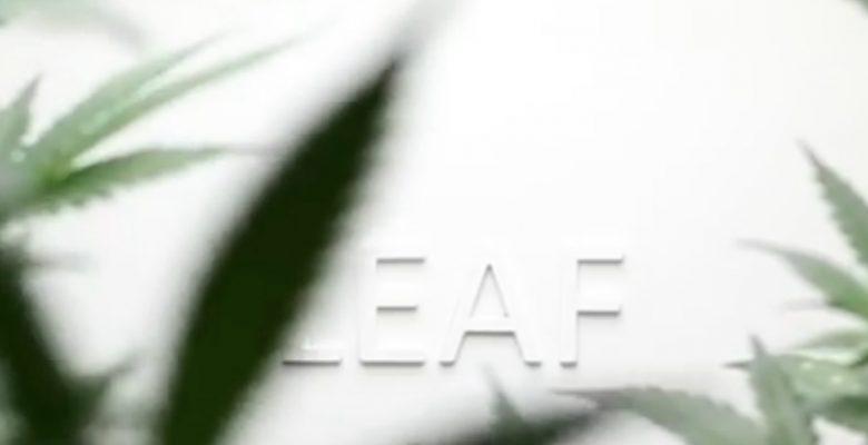 Este gadget te ayudará a cultivar marihuana de calidad suprema
