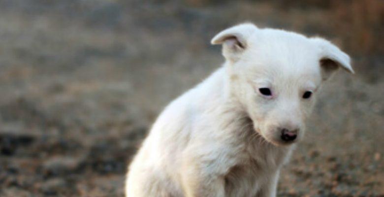 Estudiante de la UNAM crea comida anticonceptiva para perros callejeros