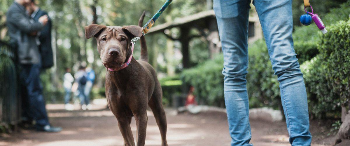 Éstos mexicanos crearon una app para la seguridad de tu perro