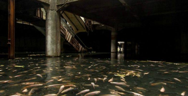 Un artista ha atravesado EU para fotografiar centros comerciales abandonados