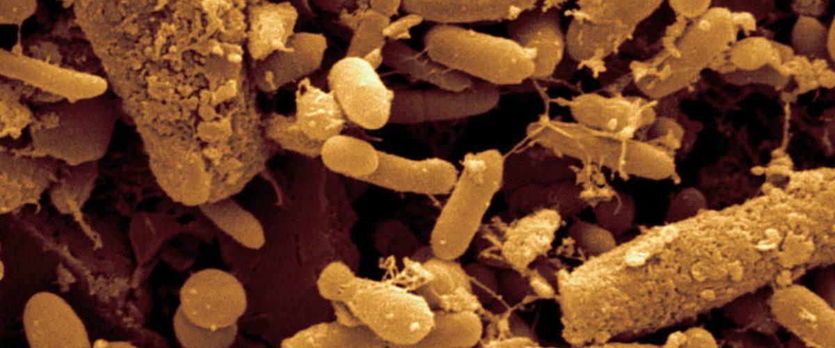 Usan bacterias fecales para guardar ¿el GIF de un caballo?