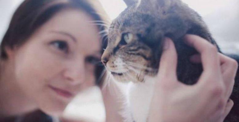 Estudio vincula un parásito de los gatos con enfermedades neurológicas