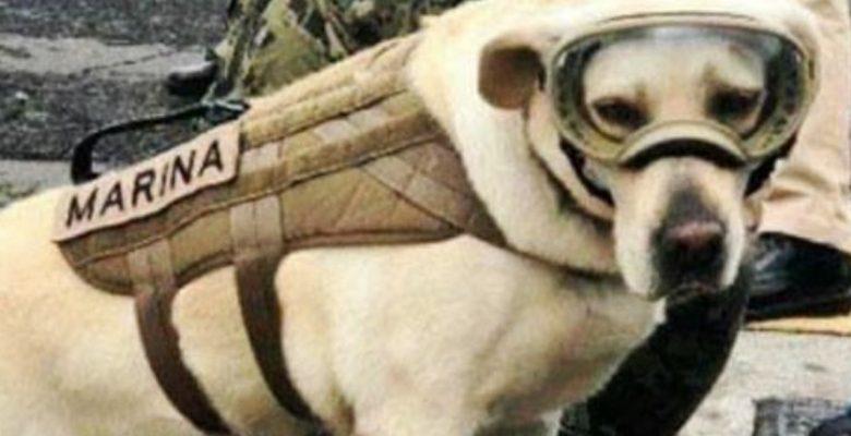 Frida, la perrita rescatista, ya tiene su propio emoji