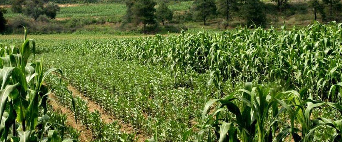 Otorgan fertilizante gratuito al campo guerrerense