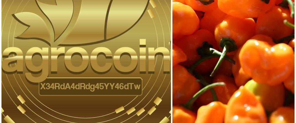 La criptomoneda mexicana que permitirá la producción del chile habanero