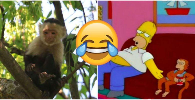 Los memes del mono que se escapó en la CDMX son lo mejor que verás hoy