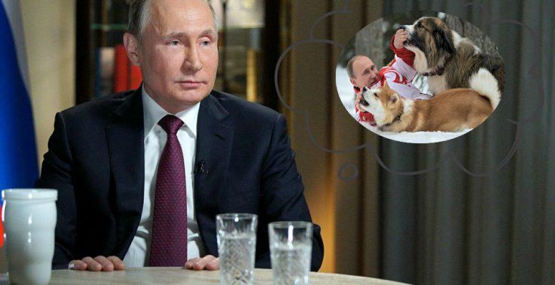 Los costosísimos y lujosos perros con los que rinden tributo a Putin