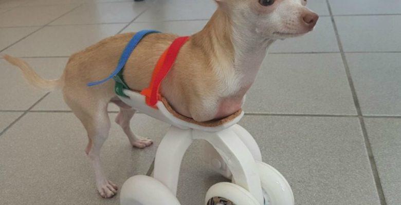 Mexicanos desarrollan la primera prótesis canina en 3D