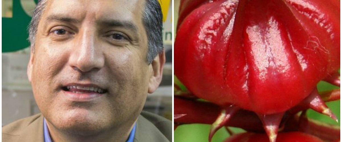 Mexicanos crean desinfectante hospitalario con flor de jamaica