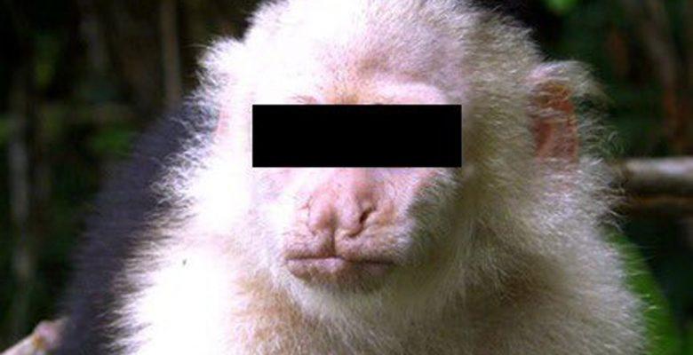 Así terminaron los días del mono de las Lomas como 'prófugo'