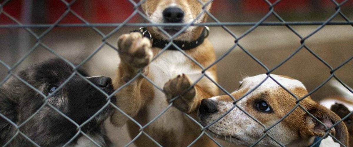 #Intolerable Centro canino en Tláhuac es acusado por cruel forma de matar perritos