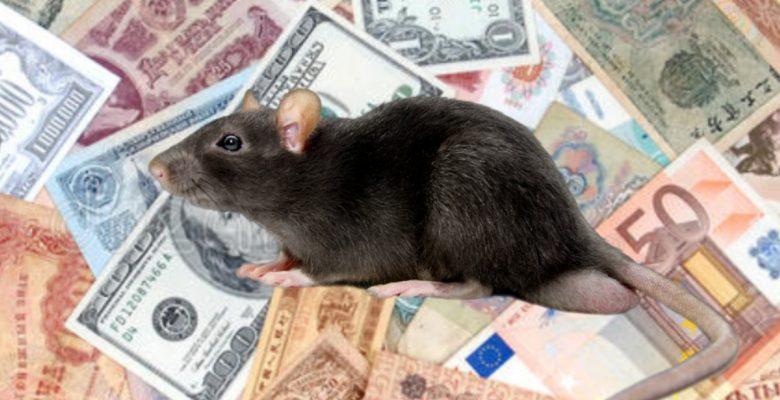 Una rata se mete a un cajero y se come 350 mil pesos
