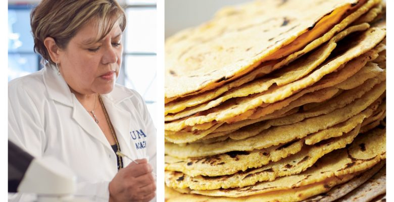 #Milagro La UNAM creó una tortilla que combate la diabetes y obesidad