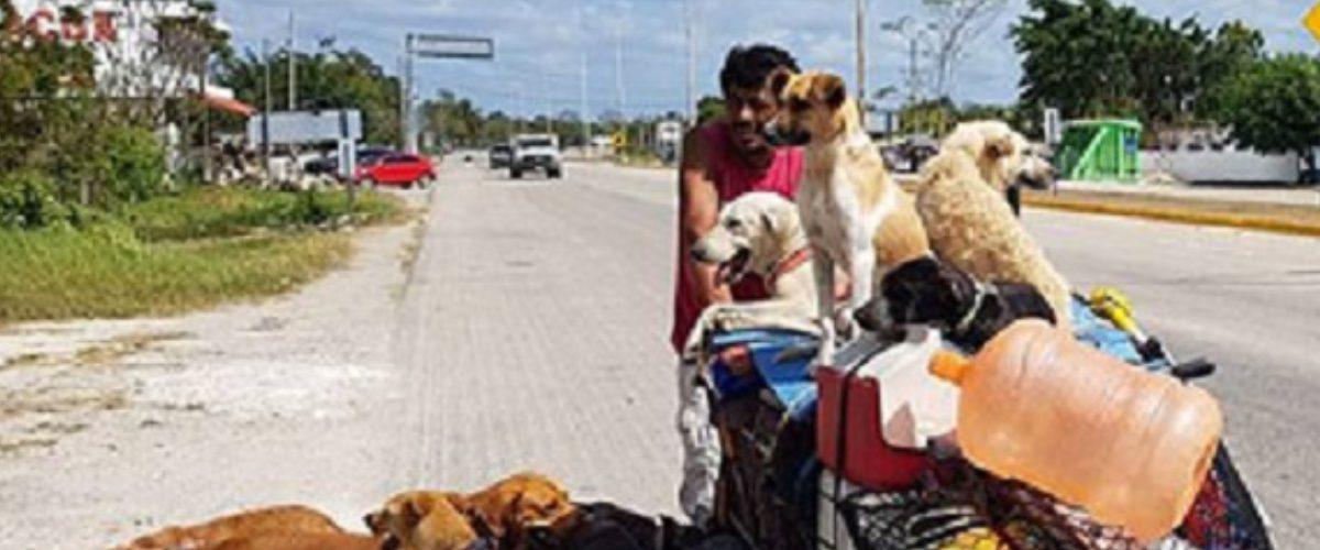 #Héroe: El mexicano que recorre el país rescatando perritos abandonados