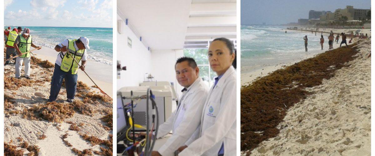 Científicos mexicanos convierten sargazo en combustible
