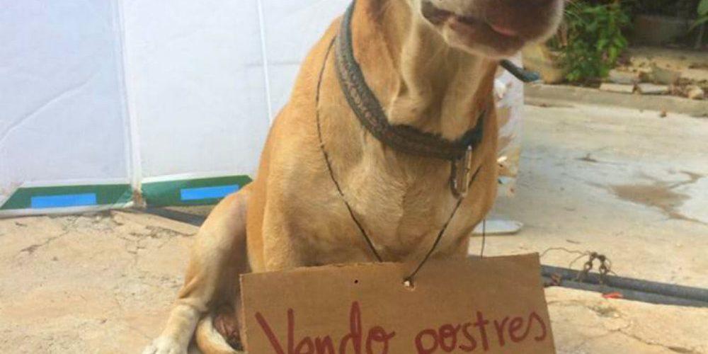 Perrito vende postres para pagar su tratamiento contra el cáncer