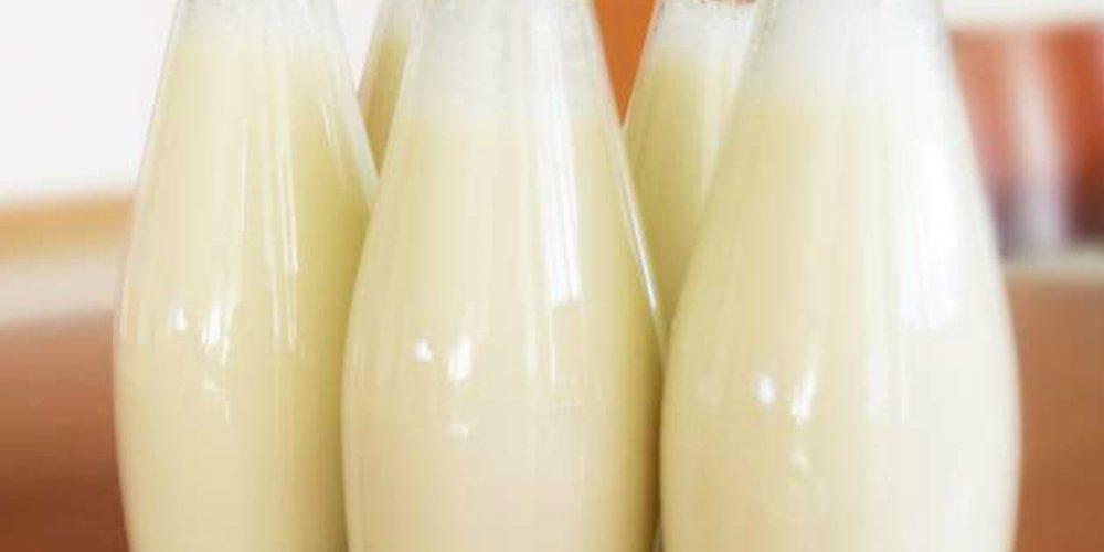 ¿Por qué la leche de cucaracha podría ser el superalimento del futuro?