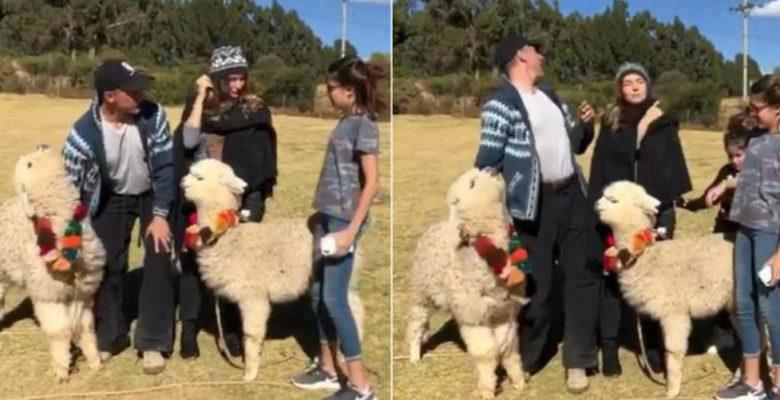 Alpaca le escupe al diputado Sergio Mayer cuando intentaba tomarse una foto