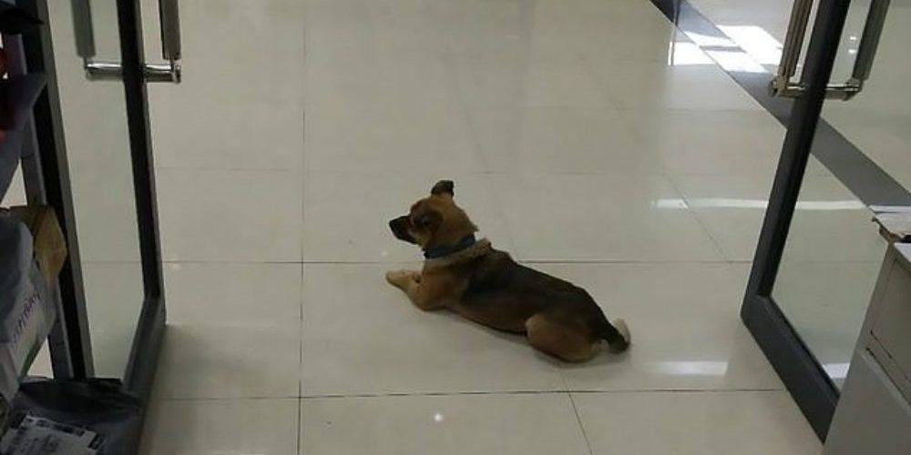 perro afuera de hospital