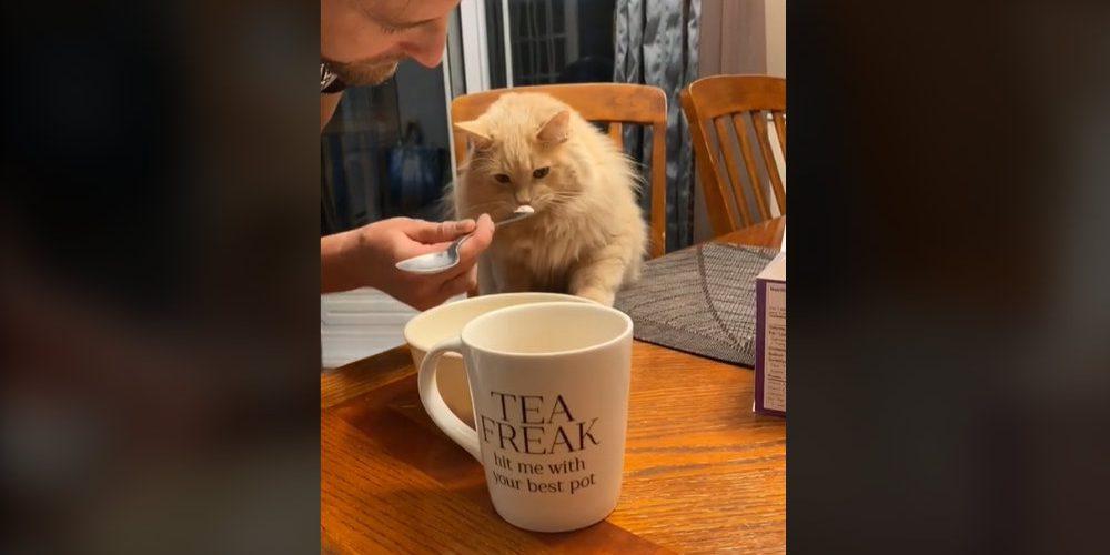 Gato prueba helado por primera vez y su reacción se hace viral