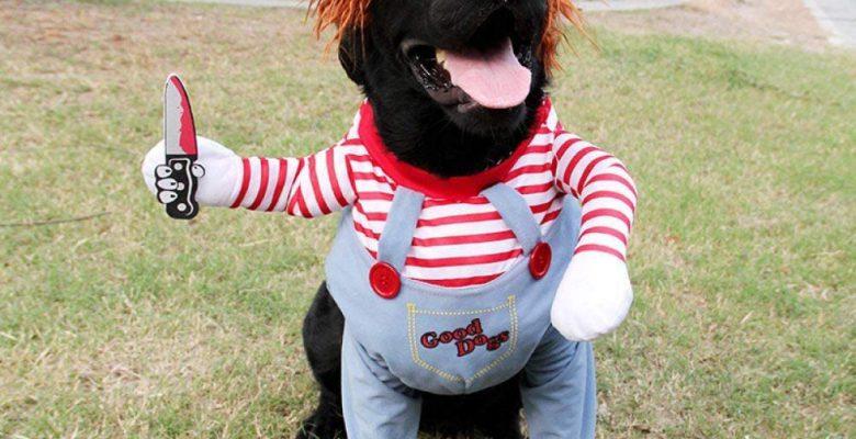 Disfraces de Halloween para tu mascota que seguro amarás
