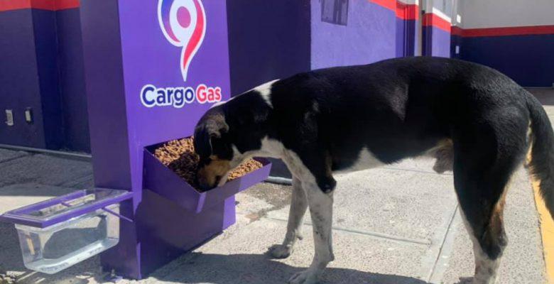Gasolinera pone dispensadores de agua y comida para perritos callejeros