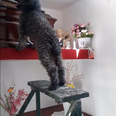 Perrito sigue visitando la tumba de su dueña a 4 años de su muerte