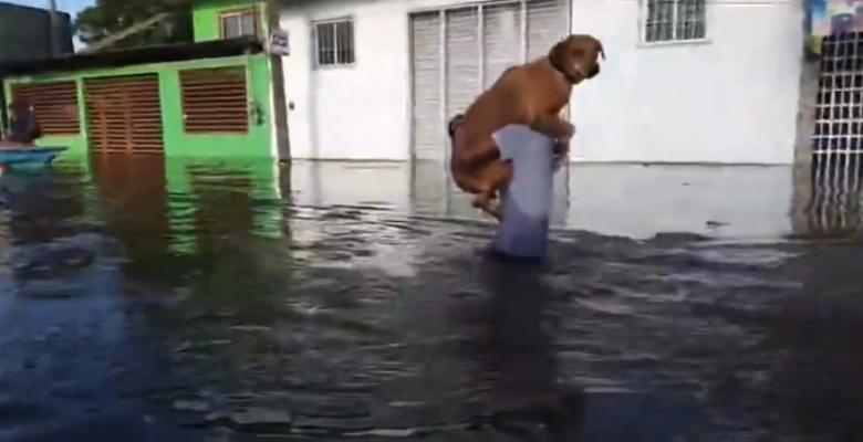 Joven rescata a su perrito Frijol de las inundaciones de Tabasco