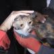 Perro rescata a un gato de los escombros tras sismo en Turquía