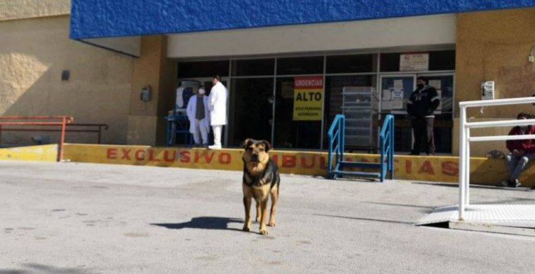 'Covito', el perro que espera a su amo fallecido por COVID-19 afuera de hospital