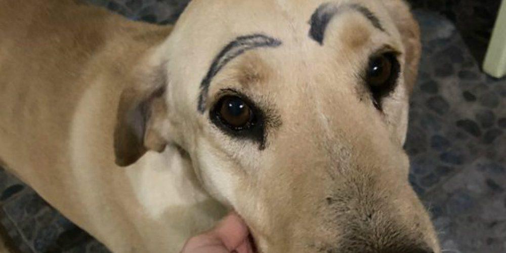Perrito se escapa de su casa y regresa con las cejas pintadas