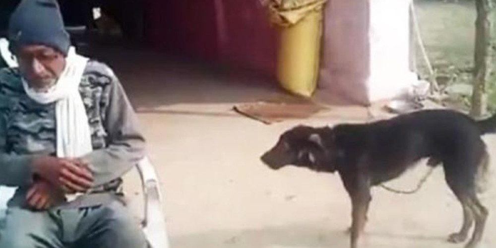 Abuelito le hereda sus bienes a su perro porque lo cuidó más que sus hijos