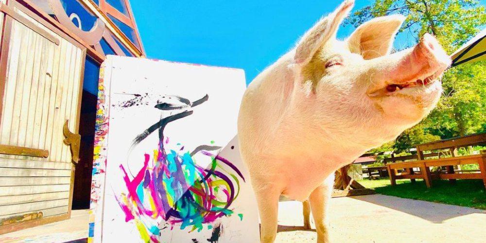 Pigcasso, el cerdito que pinta obras valuadas en miles de dólares