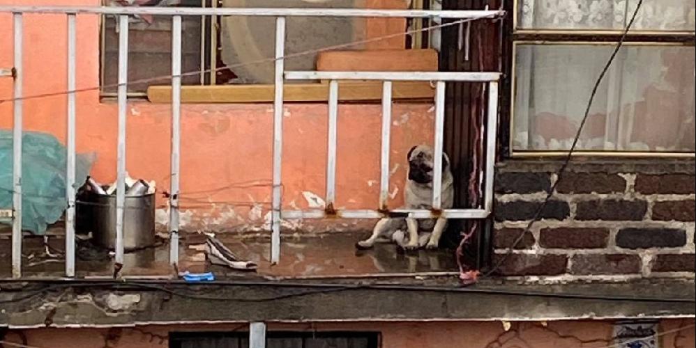 Indigna video de familia que dejó a su perrito afuera mientras llovía
