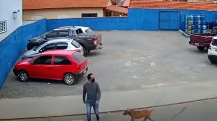 Perrito 'atropella' a un peatón que intentaba cruzar la calle