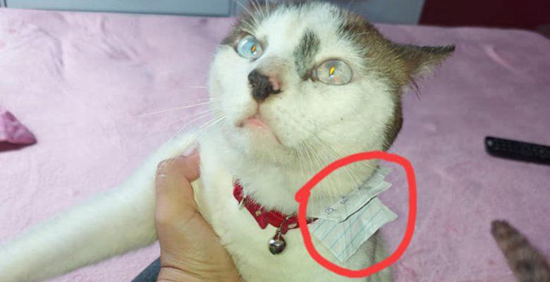 Le compra un collar a su gato y descubre que tiene otra familia