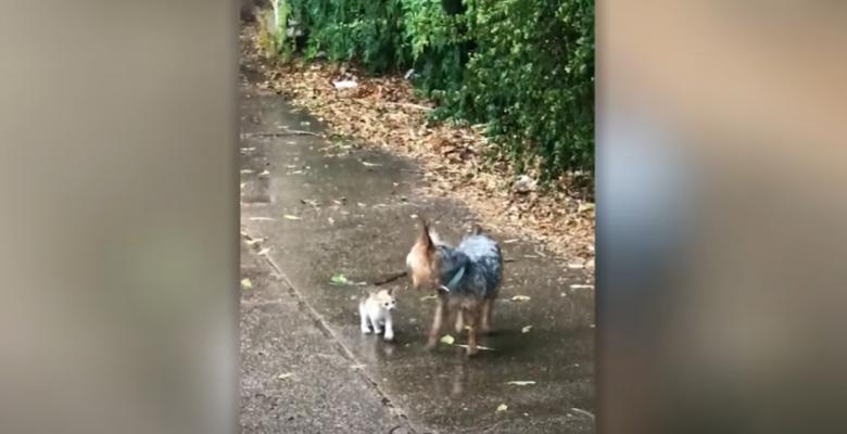 Perro rescata a gato bebé de la lluvia y lo lleva a su casa